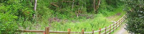 Jumbo Cedar Split Rail